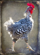 Rooster Art - Down Home at Gails Farm by Christine Belt