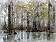Cypress Tree Digital Art Prints - Down on the Bayou - Digital Painting Print by Carol Groenen