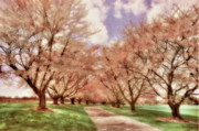 Maryland Digital Art - Down The Cherry Lined Lane by Lois Bryan