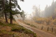 Fence Post Photos - Down The Foggy Road by James Steele