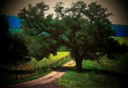 Country Lanes Metal Prints - Down the Lane Metal Print by Joyce L Kimble