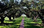 Oak Alley Plantation Photo Prints - Down the Path Print by Maggy Marsh