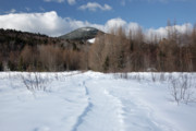 New River Valley Prints - Downes - Oliverian Brook Ski Trail - White Mountains New Hampshire  Print by Erin Paul Donovan