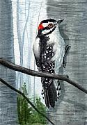 Woodpecker Paintings - Downey Woodpecker by Sean Seal