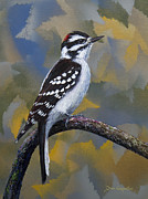 Woodpecker Prints - Downy Boy Print by Dee Carpenter