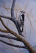 Woodpecker Prints - Downy Woodpecker Print by Dee Carpenter