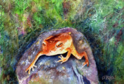 Amphibians Framed Prints - Dozing On A Rock Framed Print by Arline Wagner