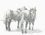 Percheron Drawings Posters - Draft Horses Poster by Cathy Lester
