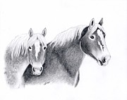 Percheron Drawings Posters - Draft Horses Poster by Sherri Strikwerda