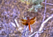 Dragon Fly Framed Prints - Dragon Fly Framed Print by Bryan Steffy
