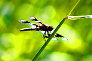Dragon Fly Framed Prints - Dragon Fly Framed Print by Nick Gustafson