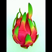 Fantasy Art - Dragon Fruit by Darice Machel McGuire