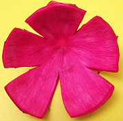 Phachesnie Studio - Dragon Fruit Peel