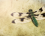 Dragonfly Prints - Dragon in the Sun Print by Amy Tyler