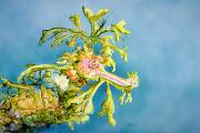 Sea Dragon Paintings - Dragon of the Sea by Tanya L Haynes - Printscapes