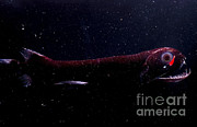 Deepsea Prints - Dragonfish Print by Dante Fenolio