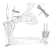 Robert Meszaros Drawings Metal Prints - Dragonflies And Cattails - Sketch Metal Print by Robert Meszaros