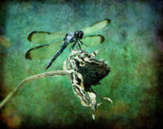 Insect Digital Art Posters - Dragonfly Art Poster by Sari Sauls