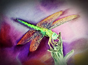 Springtime Pastels - DragonFly Bright by Teresa Vecere
