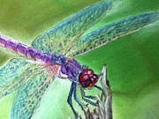Bug Pastels Framed Prints - DragonFly crop1 Framed Print by Teresa Vecere