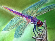 Bug Pastels Framed Prints - DragonFly crop2 Framed Print by Teresa Vecere