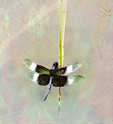 Textured Photograph Prints - Dragonfly Devotion Print by Betty LaRue