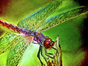 Dragon Fly Mixed Media Posters - DragonFly II Poster by Teresa Vecere