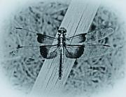 TONY GRIDER - Dragonfly in Cyan