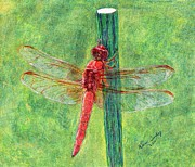 Colored Background Drawings - Dragonfly by Karen Curley