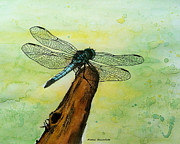 Dragonfly Drawings Framed Prints - Dragonfly Framed Print by Mamie Greenfield