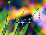 Dragonfly Digital Art Framed Prints - Dragonfly on Pastels Framed Print by Bill Tiepelman