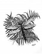 Fern Drawings - Dragonfly by Peter Piatt