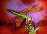 Springtime Pastels - DragonFly Red by Teresa Vecere
