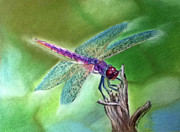 Bug Pastels Framed Prints - DragonFly Framed Print by Teresa Vecere