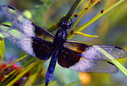 Dragonfly Photo Framed Prints - Dragonfly Framed Print by Tony Ramos