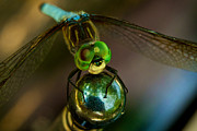 Alien Eyes Photos - Dragonfly by William Jobes