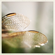 Deb Schmill - Dragonfly Wings