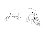Minimalist Pastels Framed Prints - Drawing of a resting dog Framed Print by Sofia Ugarte
