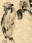 Yellow Beak Drawings - Drawing of two Eagles by Odon Czintos
