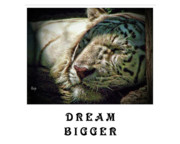 Tiger Dream Framed Prints - Dream Bigger Framed Print by Traci Cottingham