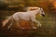 Livestock Digital Art - Dream Canter by Dorota Kudyba