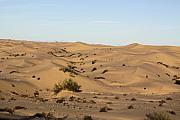Sand Dunes Pyrography Metal Prints - Dream Dunes 0156 Metal Print by Sharon Broucek