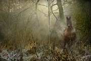 Horse Photo Posters - Dream Forest Poster by Dorota Kudyba