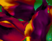 Mathilde Vhargon Metal Prints - DREAM GARDENS - Tulip Petals - Shimmering Brights Metal Print by Mathilde Vhargon