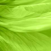 Angela Doelling AD DESIGN Photo and PhotoArt - Dream green