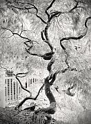 Mono Prints - Dream Tree Print by Dorit Fuhg