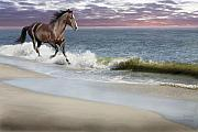 Equine Mixed Media Prints - Dreamer On The Beach Print by Barbara Hymer