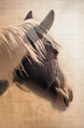 Quarterhorses Posters - Dreaming Across the Fence Poster by Betty LaRue