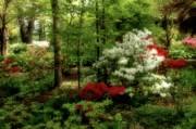 Dreaming Of Spring Print by Sandy Keeton