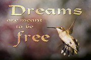 Dreams Free Prints - Dreams Print by Gwen Vann-Horn